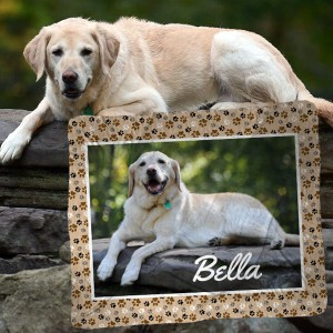 Personalized photo blankets of your pets!