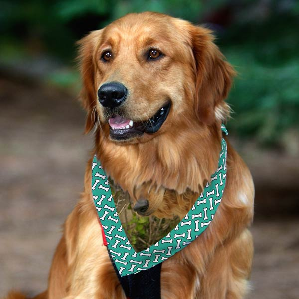Golden retriever in a photo custom bandana for pets