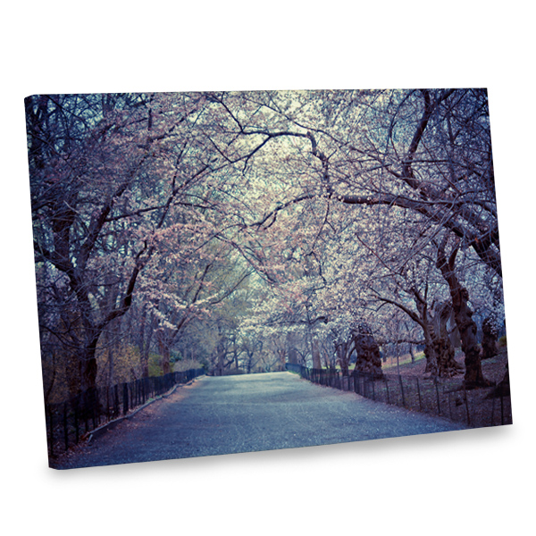 Add an air of springtime to your home decor with our cherry blossom photo canvas print.